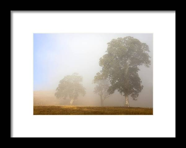 Gum Tree Framed Print featuring the photograph Emerging From The Fog by Mike Dawson