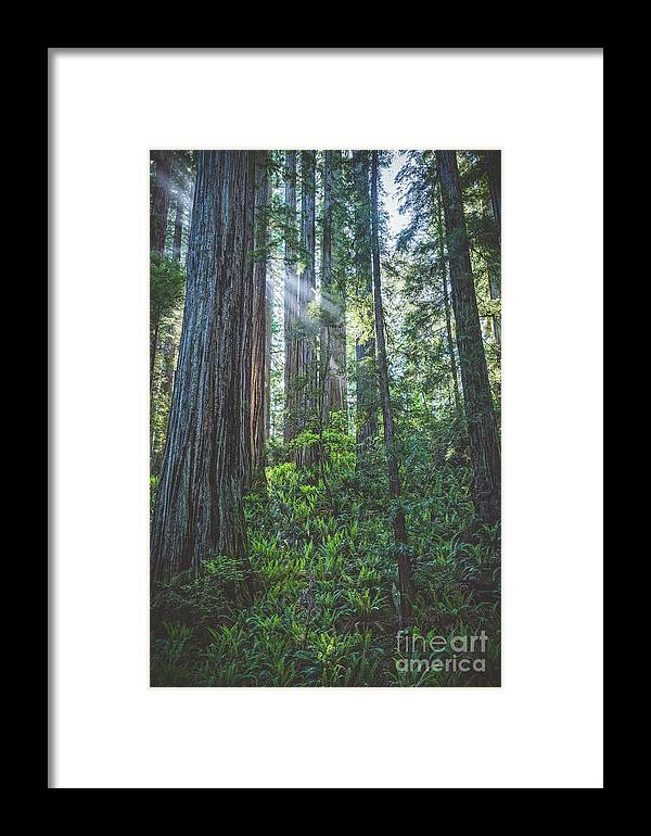 Adventure Framed Print featuring the photograph Enchanted Forest by Charles Dobbs