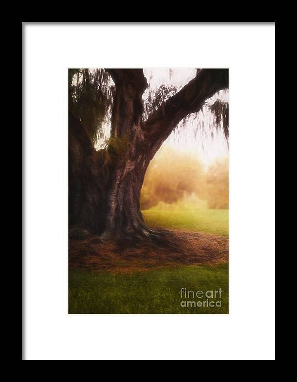 Tree Framed Print featuring the photograph Enchanted by Margie Hurwich