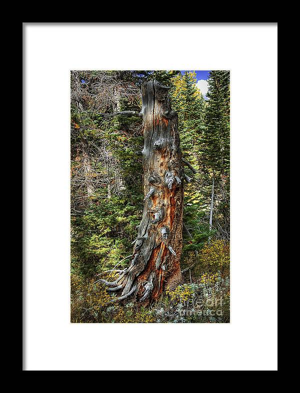 Nature Framed Print featuring the photograph Enchanted Tree by Pete Hellmann