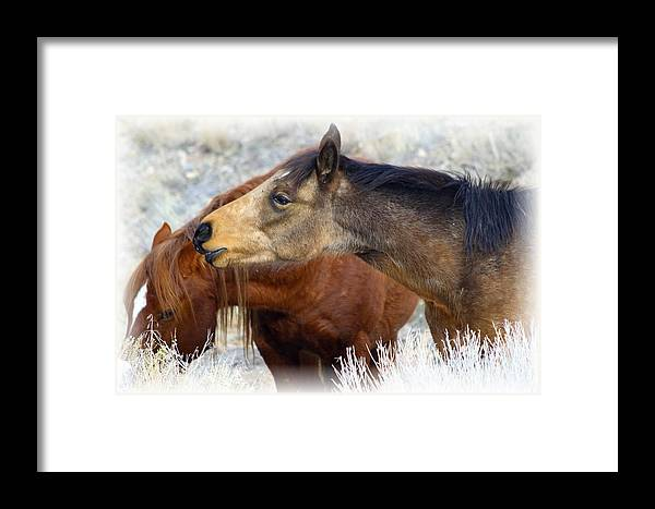 Wild Framed Print featuring the photograph Enchanting by Gene Praag