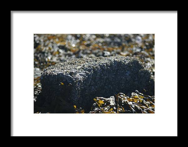 Rock Framed Print featuring the photograph Encrusted Rock by Jeffrey Ober