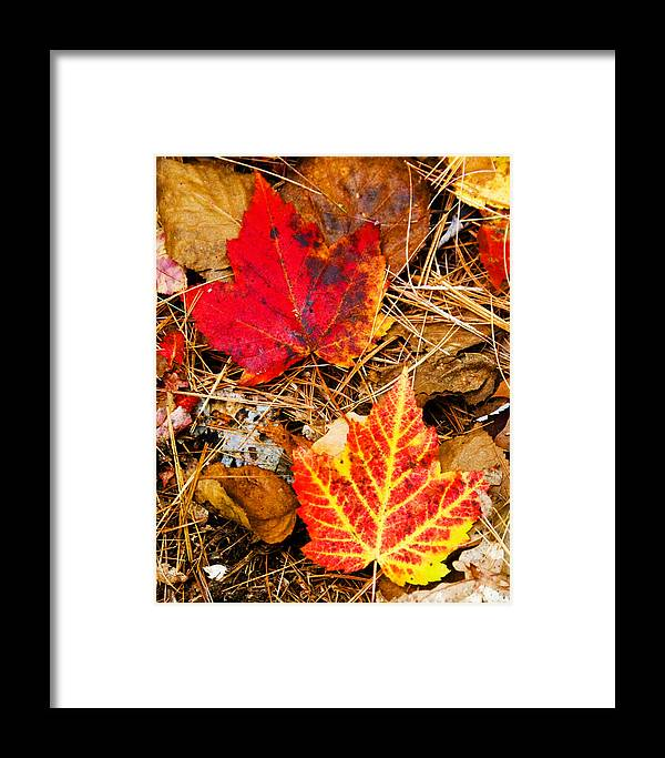 Fall Framed Print featuring the photograph End Of Fall by Bob Bailey