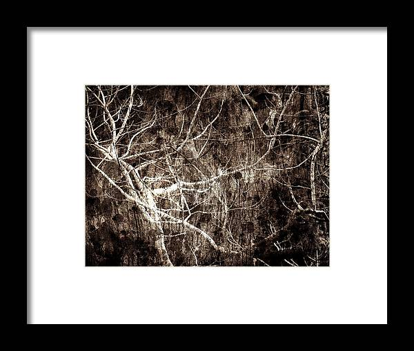 Tree Framed Print featuring the photograph Endless by Gaby Swanson
