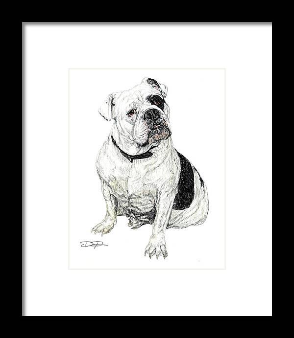 Bulldog Framed Print featuring the drawing English Bulldog by Dan Pearce