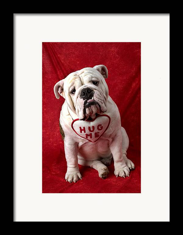 Dog Framed Print featuring the photograph English Bulldog by Garry Gay