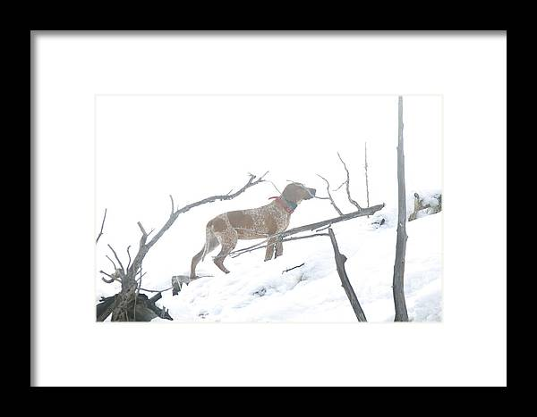 Big Game Hound Framed Print featuring the photograph English Redtick Hound  by Daniel Davidson