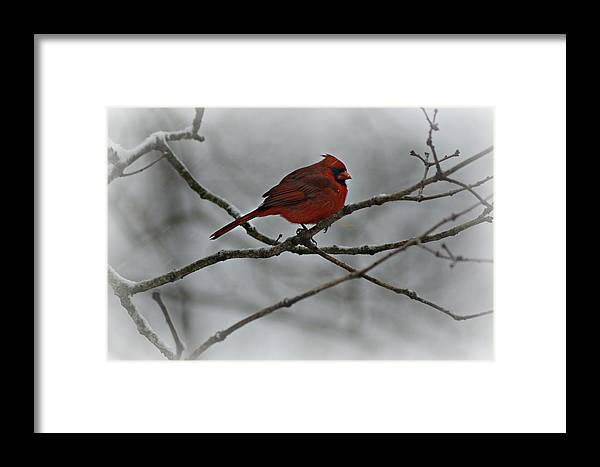 Bird Framed Print featuring the photograph Enjoying The Snowfall by Pics by Jody Adams