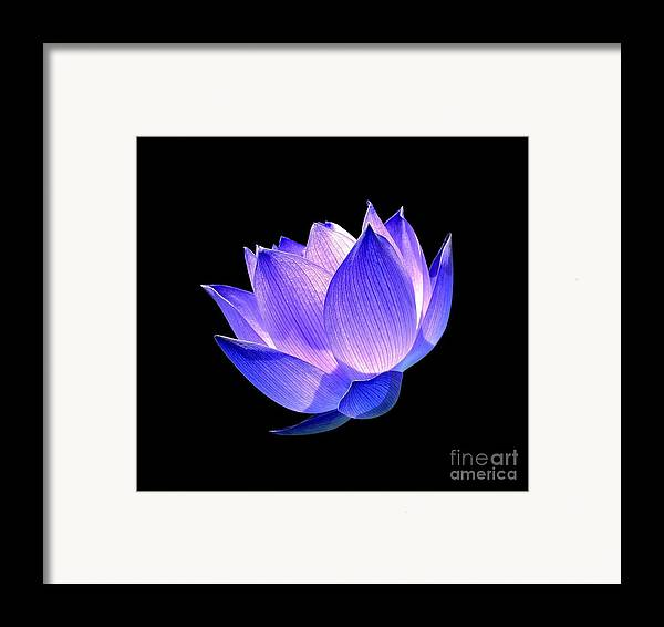 Flower Framed Print featuring the photograph Enlightened by Jacky Gerritsen