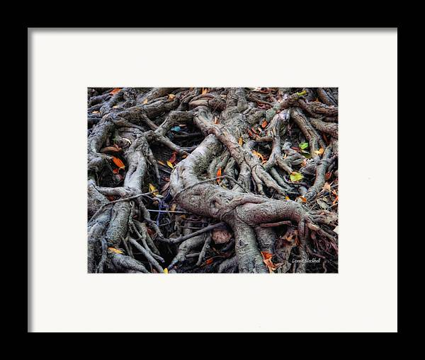 Roots Framed Print featuring the photograph Entanglement by Donna Blackhall
