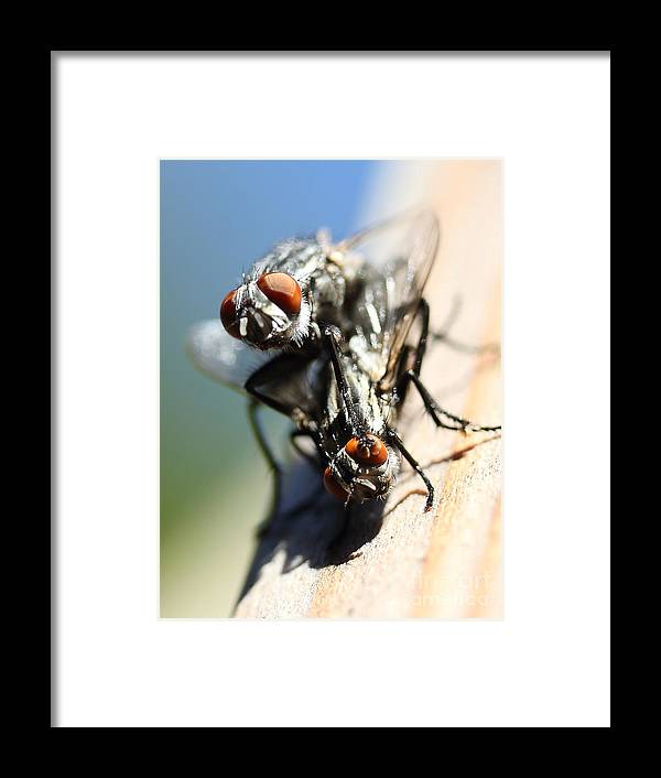Macro Framed Print featuring the photograph Entomologists Discover Why People Want To Be A Fly On The Wall by Wingsdomain Art and Photography