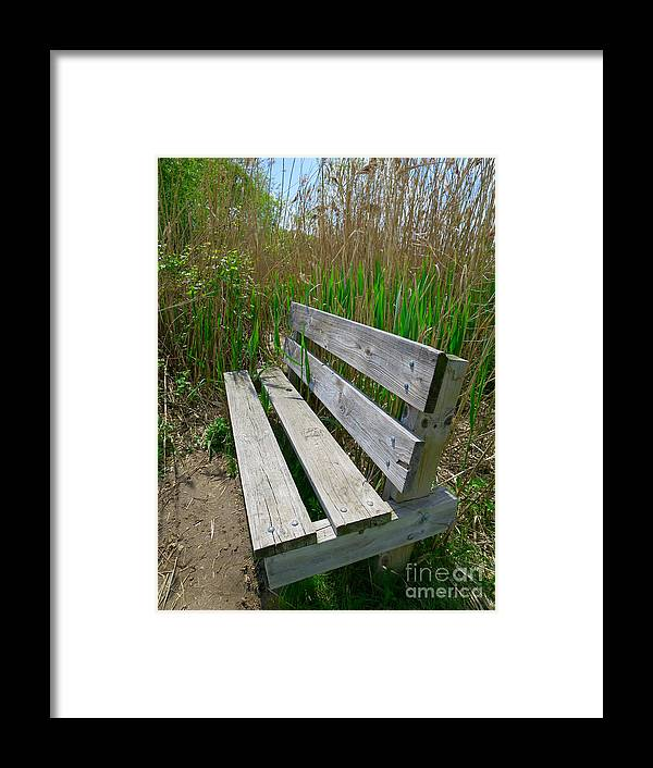 Environment Framed Print featuring the photograph Environmentally Friendly Seating by Ann Horn