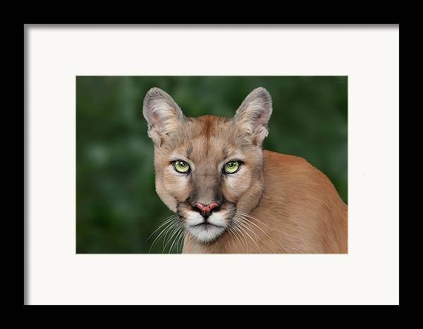 Enya Framed Print featuring the digital art Enya by Big Cat Rescue
