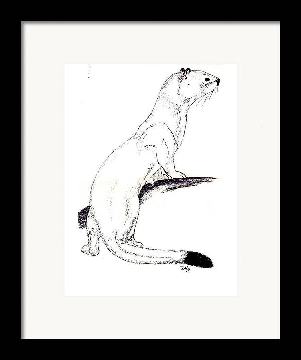 Weasel Framed Print featuring the painting Ermine by Debra Sandstrom