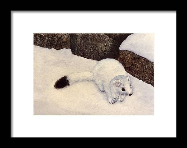 Wildlife Framed Print featuring the painting Ermine In Winter by Frank Wilson
