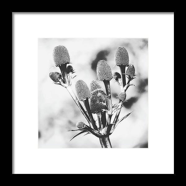 Beautiful Framed Print featuring the photograph Eryngium #flower #flowers by John Edwards