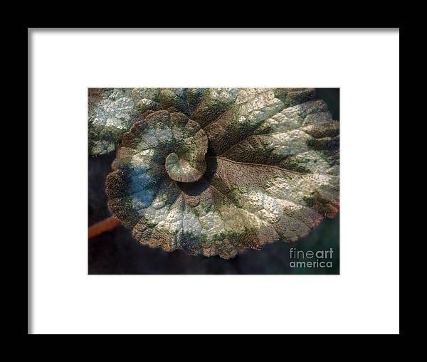Escargot Framed Print featuring the photograph Escargot Begonia by Anna Lisa Yoder