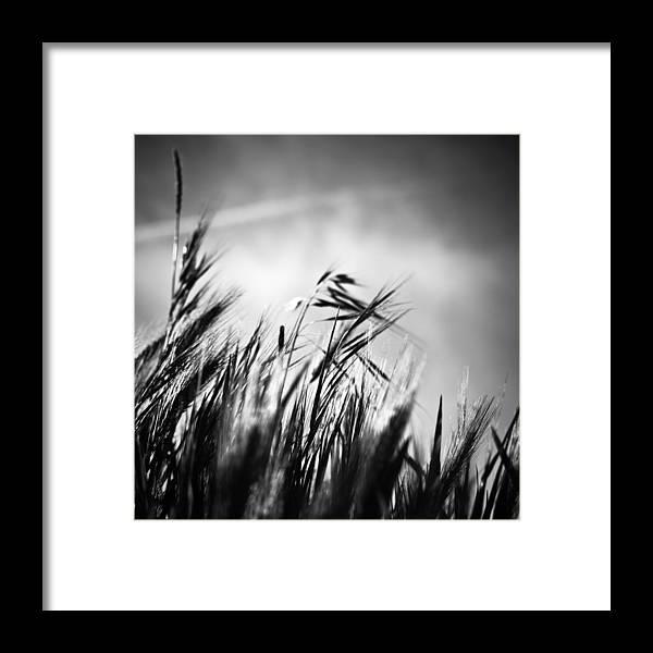 Spikes Framed Print featuring the photograph Espigas by Felix M Cobos