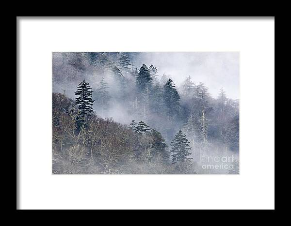Mist Framed Print featuring the photograph Ethereal Forest - D008248 by Daniel Dempster