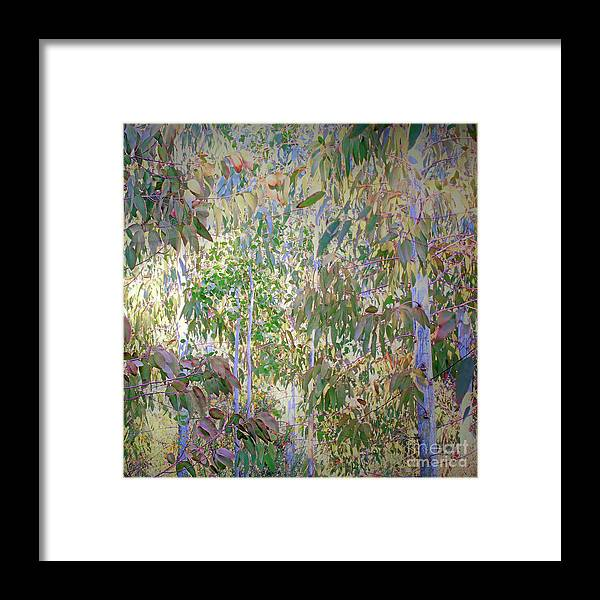 Semi Abstract Framed Print featuring the photograph Eucalyptus 012 by Ron Evans