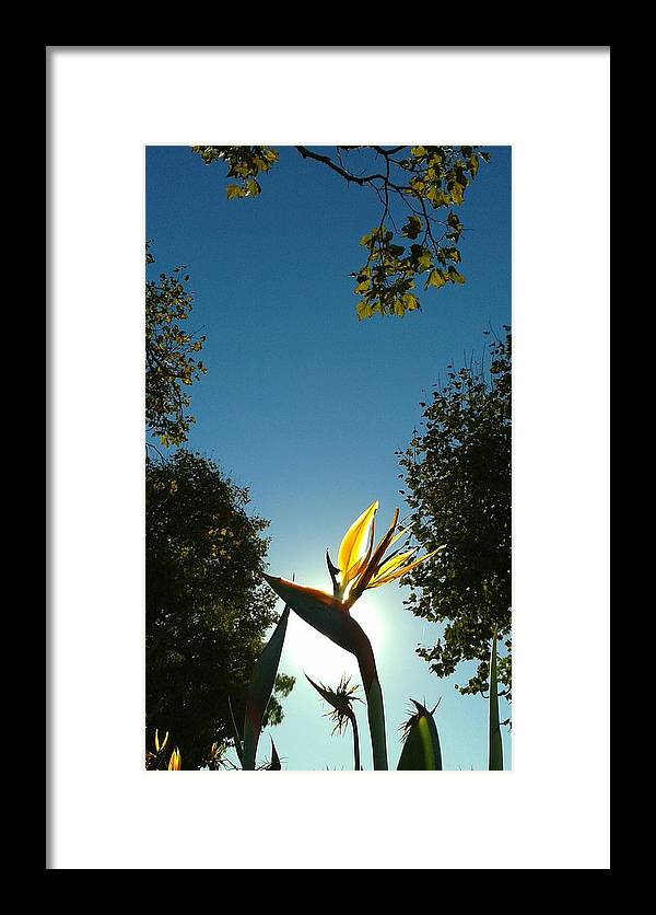 Paradise Framed Print featuring the photograph Euphoria by Clifford Purify