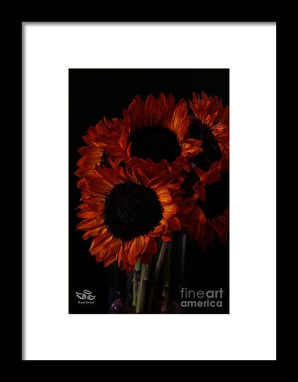 Sunflowers Framed Print featuring the photograph Even In The Darkness by Beauty For God