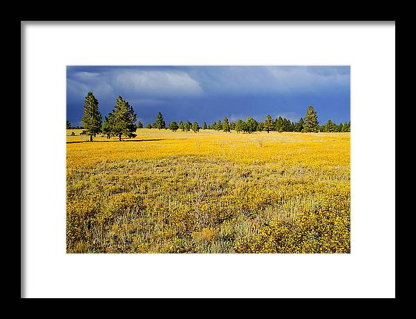 Evening Framed Print featuring the photograph Evening Contrast by Barry Shaffer