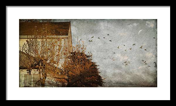 Birds Framed Print featuring the photograph Evening by Inesa Kayuta