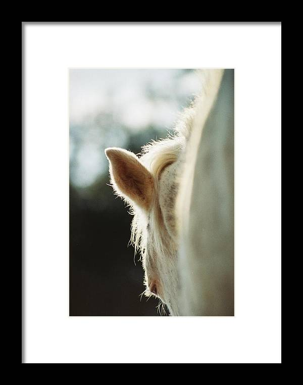 Horse Framed Print featuring the photograph Evening Light by Jennifer Trone
