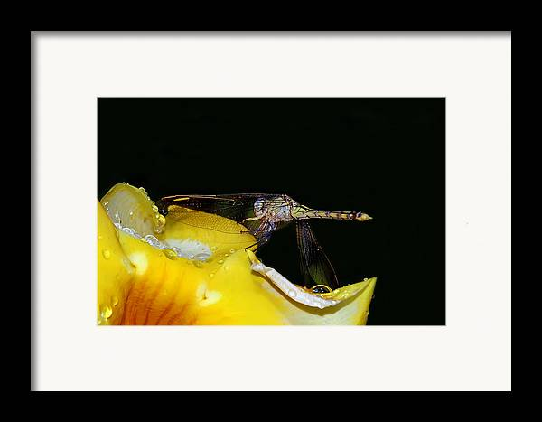 Dragonfly Framed Print featuring the digital art Evening Sip by Lesley Smitheringale