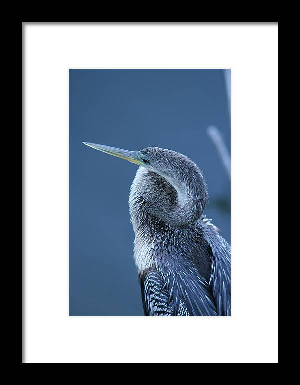 Everglades Framed Print featuring the photograph Everglades by Linda Russell
