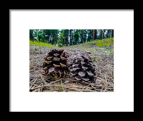 Nature Framed Print featuring the photograph Evergreen Pinecones by Amanda Chandler