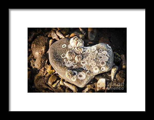 Stone Framed Print featuring the photograph Every Heart Carries A Burden by Joy Gerow
