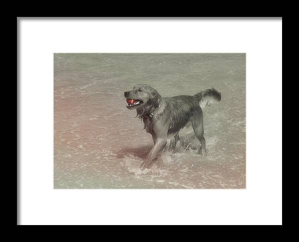Dog Framed Print featuring the photograph Everyones Best Friend by JAMART Photography