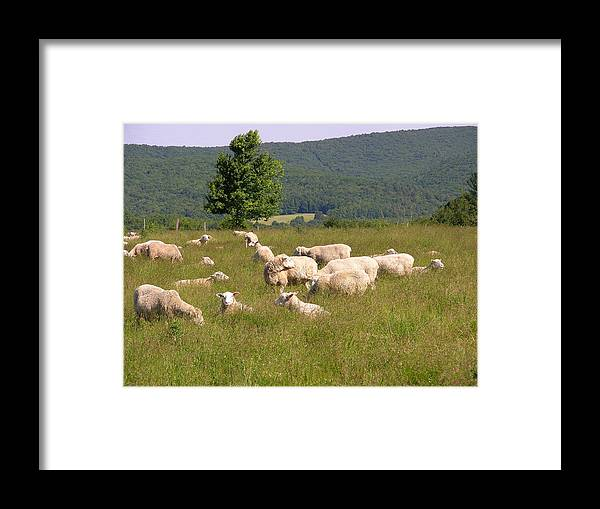 Farms Framed Print featuring the photograph Ewe's Eye View by Peter Williams