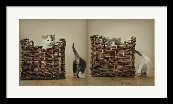Kittens Framed Print featuring the photograph Exchange by Inesa Kayuta