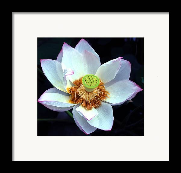 Flower Framed Print featuring the photograph Exotic Lotus by Blima Efraim