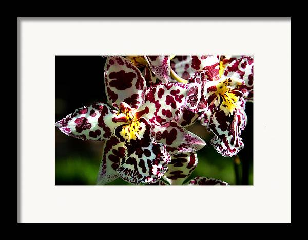 Ribet Framed Print featuring the photograph Exotic Orchids Of C Ribet by C Ribet