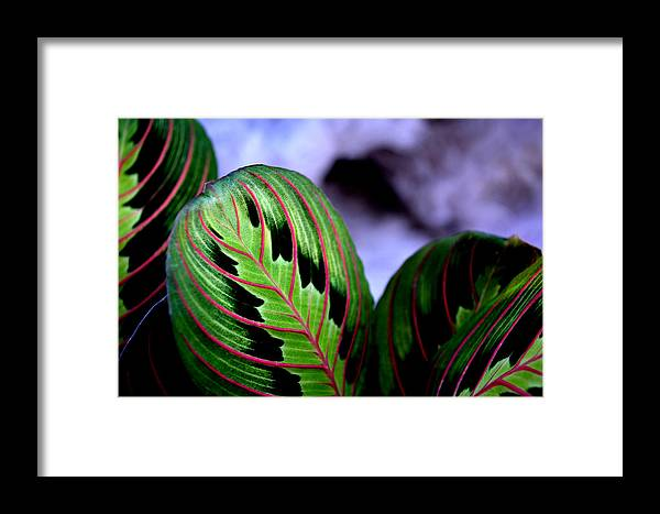 Garden Framed Print featuring the photograph Exotic Plant by Reva Steenbergen