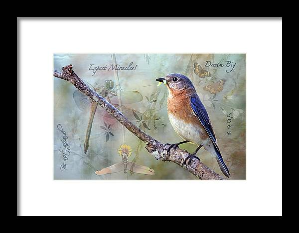 Expect Miracles Framed Print featuring the photograph Expect Miracles by Bonnie Barry