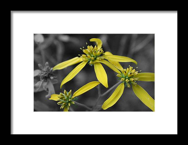 Flower Framed Print featuring the photograph Extended Family by Dylan Punke