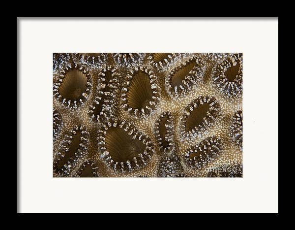 Palythoa Tuberculosa Framed Print featuring the photograph Extreme Close-up Of A Crust Anemone by Terry Moore