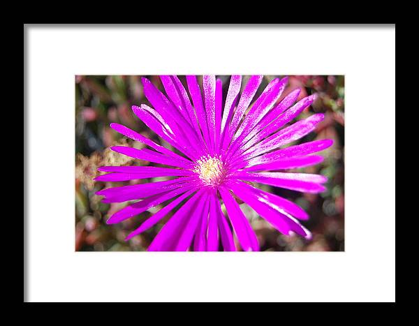 Flower Framed Print featuring the photograph Extreme Magenta by Jean Booth