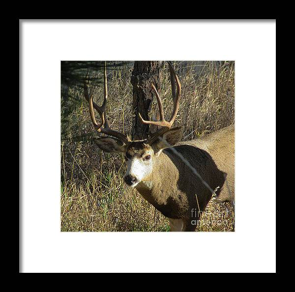 Deer Framed Print featuring the photograph Eye Contact by Jeff Birr