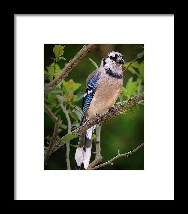 Wildlife Framed Print featuring the photograph Eye Contact by John Bartelt