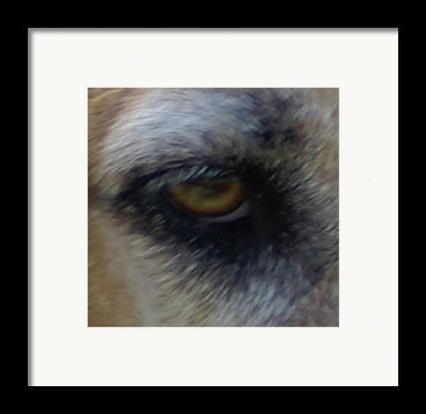 Eyes Framed Print featuring the photograph Eye Of The Beholder by Debbie May