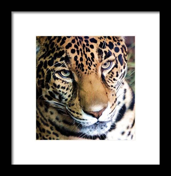 Leopard Framed Print featuring the photograph Eye Of The Leopard by Athena Mckinzie
