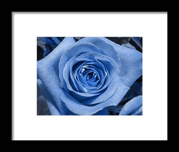 Rose Framed Print featuring the photograph Eye Wide Open by Shelley Jones