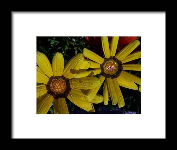Flowers Framed Print featuring the photograph Eyes For You by Vijay Sharon Govender