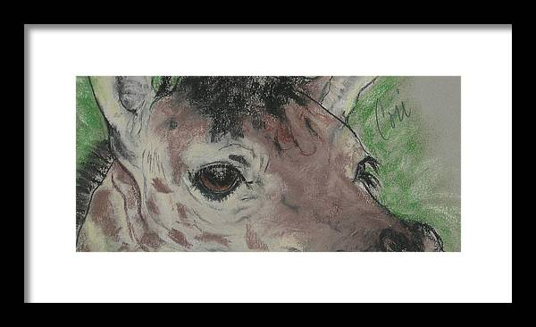 Giraffe Framed Print featuring the drawing Eyes On You by Cori Solomon
